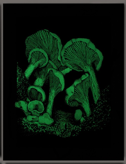 MushroomGlowInTheDark_800px